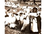 A nomad shepherd with his flock. An early photograph.